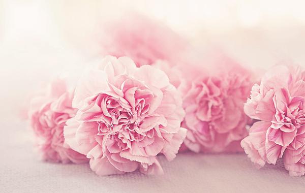 Rózsaszín virágok-Orning Anikó, webdesign, logó- és arculattervezés, honlapkészítés, grafikai munkák, plakát tervezése, felhasználóbarát és reszponzív weboldal tervezése, Pécs, kedvezményes ár
